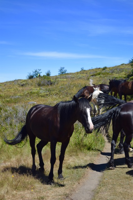 horses solo travel in patagonia