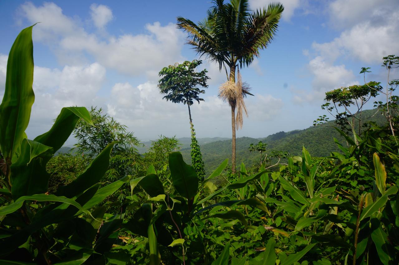 A Trek Through El Yunque Rainforest in Puerto Rico