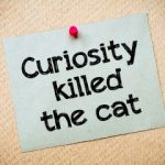 Forget the Cats, Embrace Curiosity