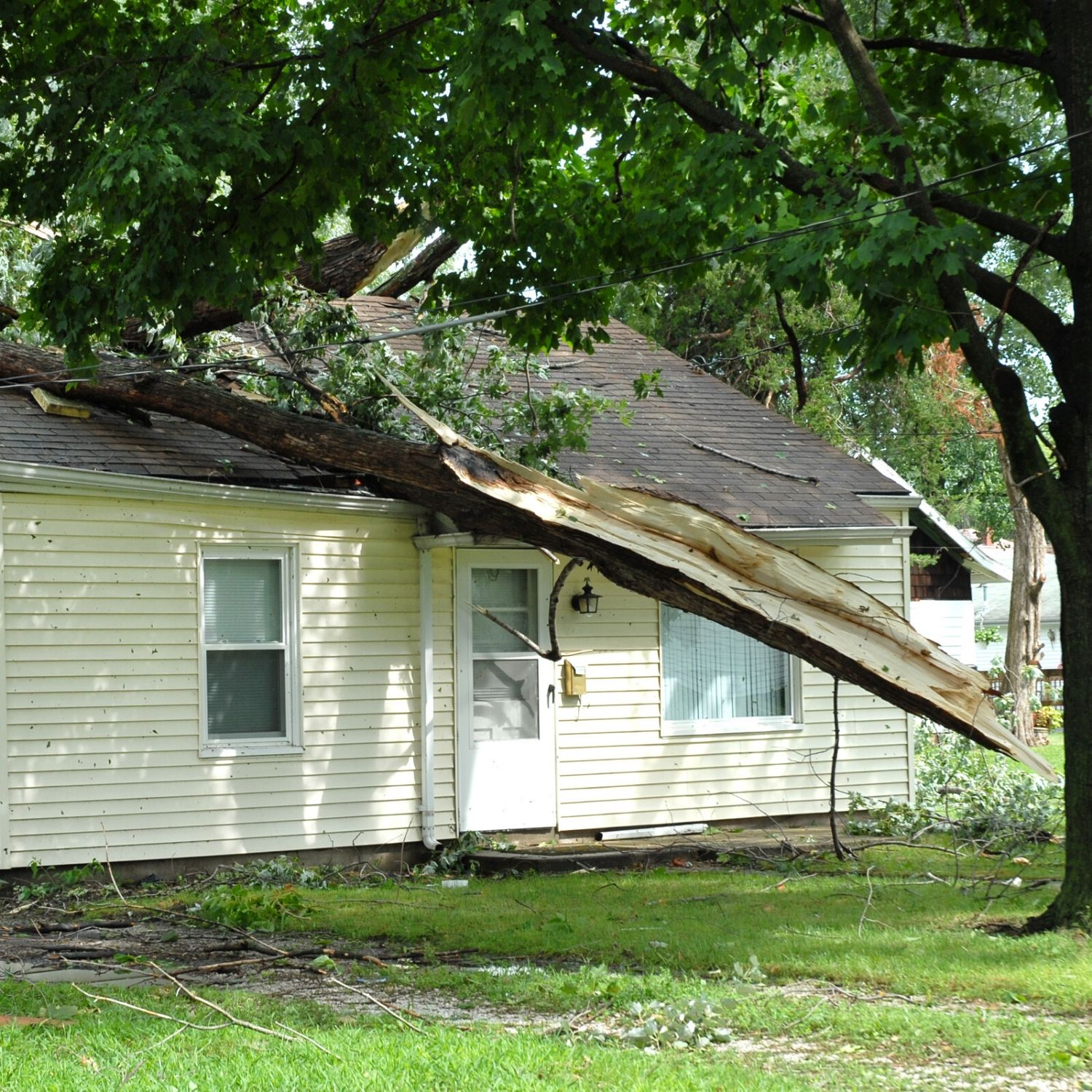 tree on roof - house before damage restoration