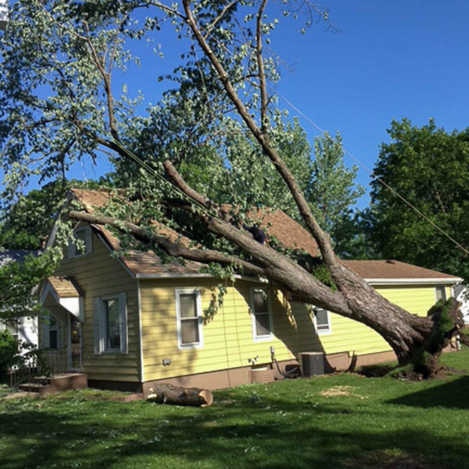 wind damage-large fallen tree on the roof of a house.