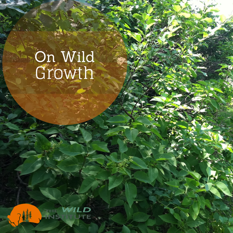 On Wild Growth