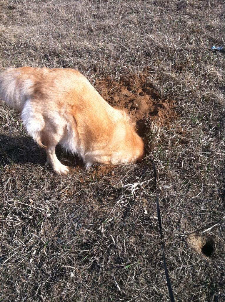 TuuWeh Digging