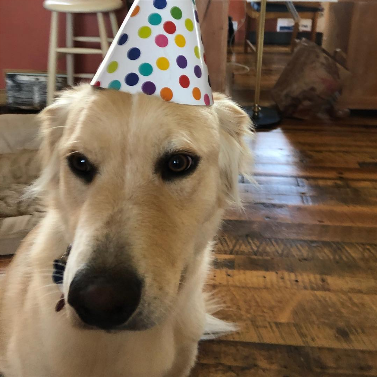 Summitt, Speaking Dog Companion and Party Lover