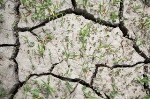 Dry soil with cracks is common in Texas.