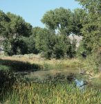 Restored oxbow of the Truckee River at the Nature Conservancy's McCarran Ranch.