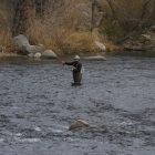 Fly fisherman on Truckee River in mid-November 2018
