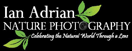 Ian Adrian Nature Photography