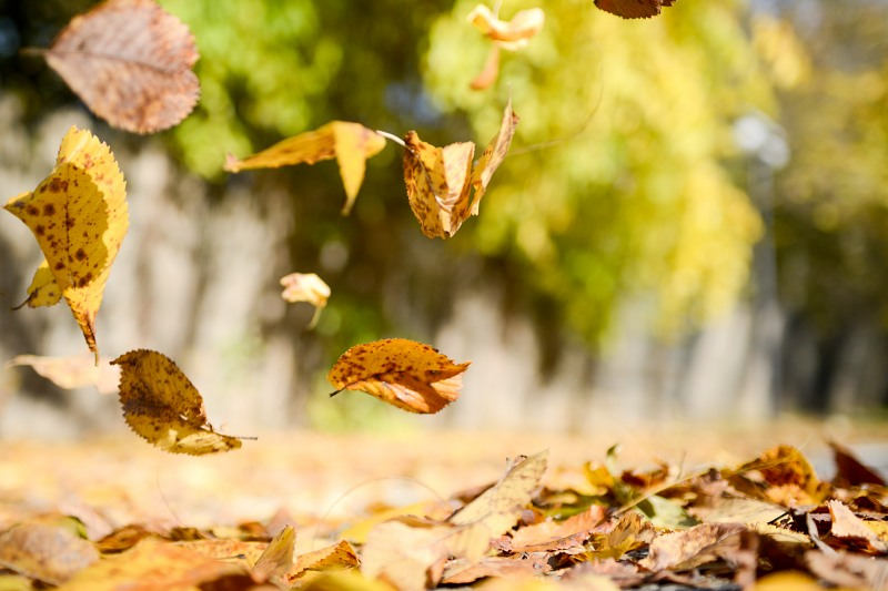 Fall-Cleanup-Services