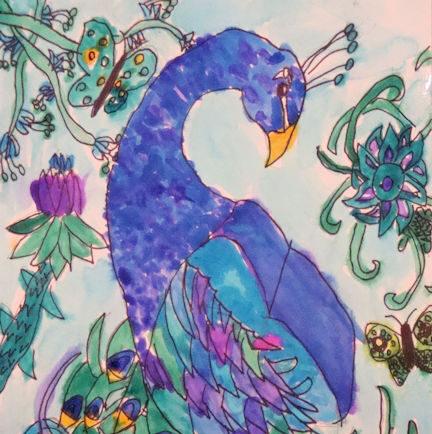 Peacock 6-8 years