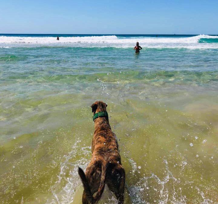 Nine Sydney dog beaches