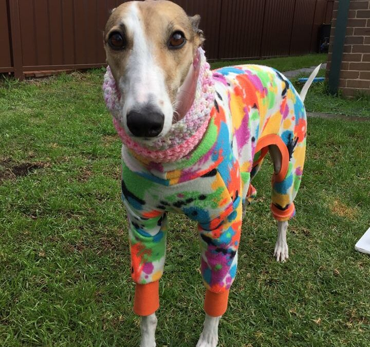 A home run for Gracie the greyhound