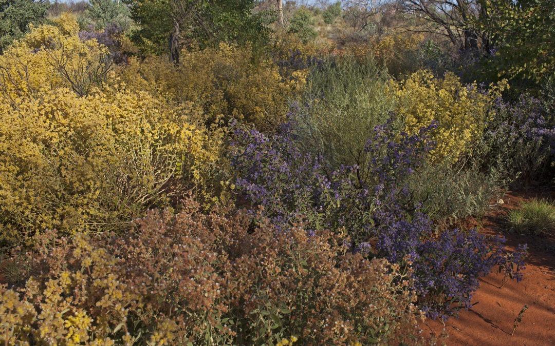 GVD Landscape Conservation Initiative