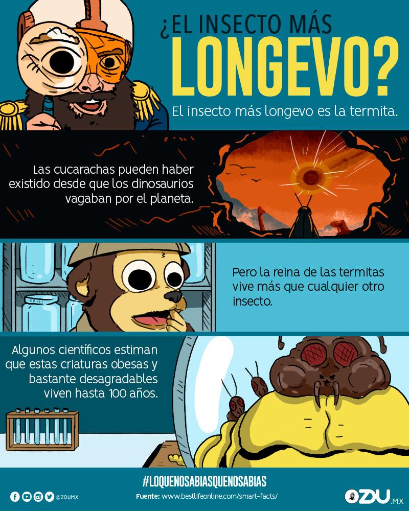¿El insecto más longevo?