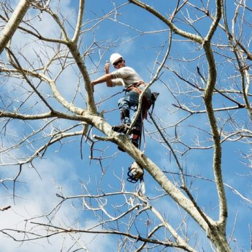How to Choose the best Tree Service Company in Charlotte County, Florida.