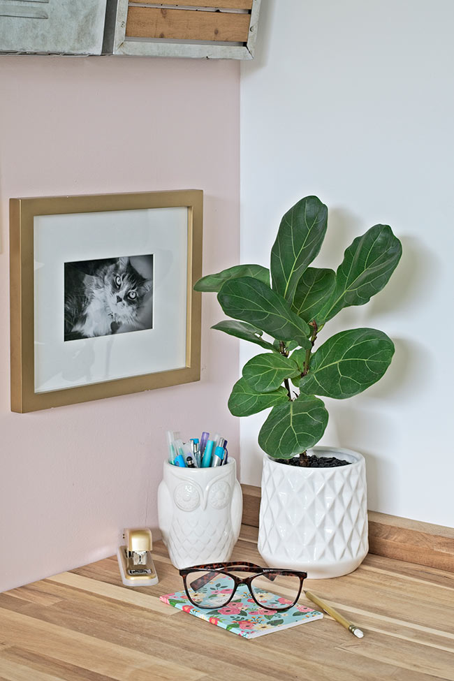 fiddle leaf fig in white planter pot on desk