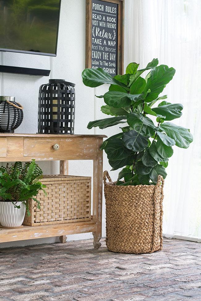 fiddle leaf fig in basket on porch