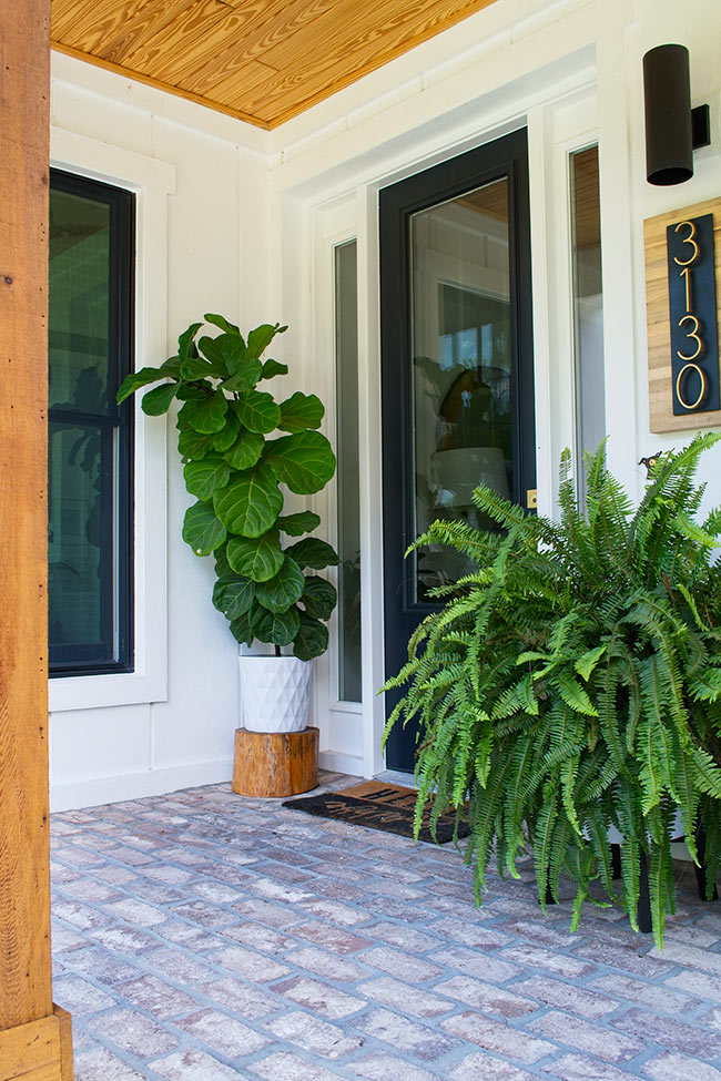 fiddle leaf fig in white planter on front porch