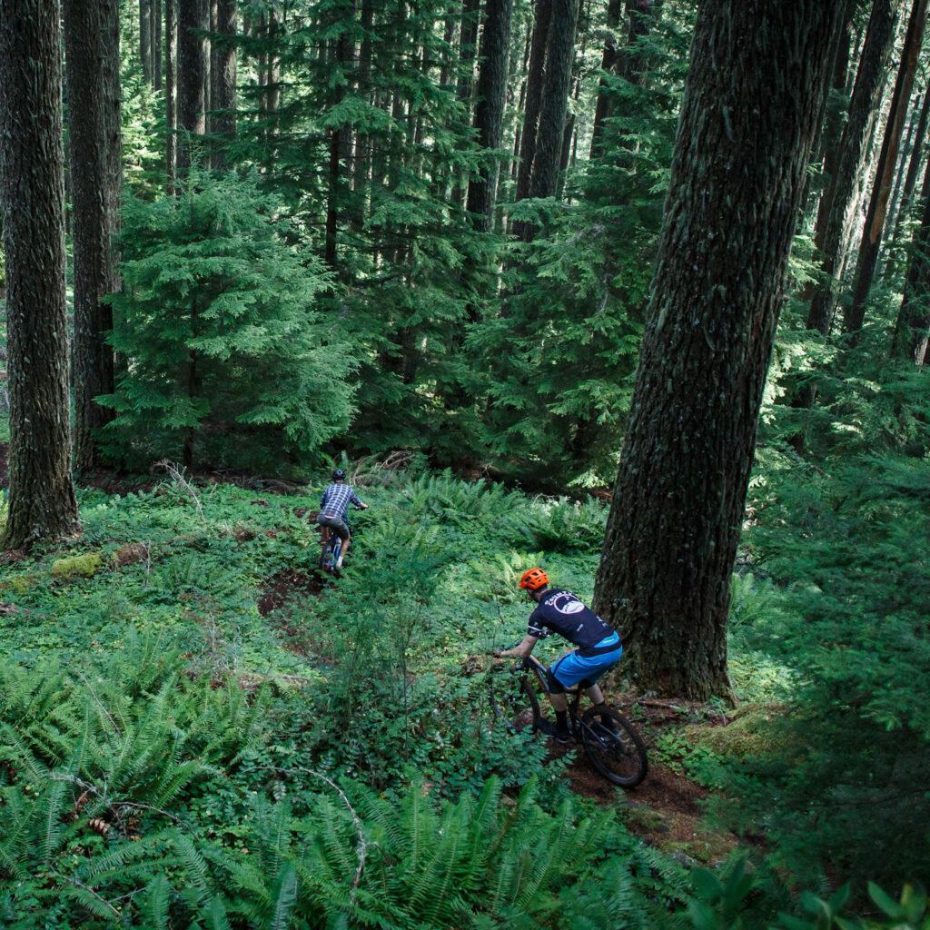 Tam Bikes - forest ride
