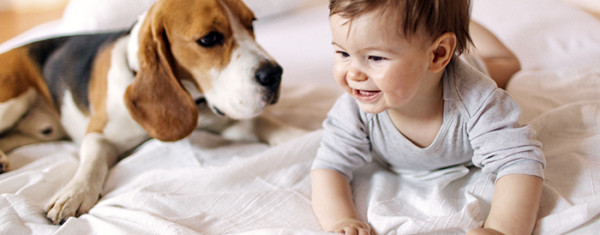 The Key to a Pet-Friendly Home Security System