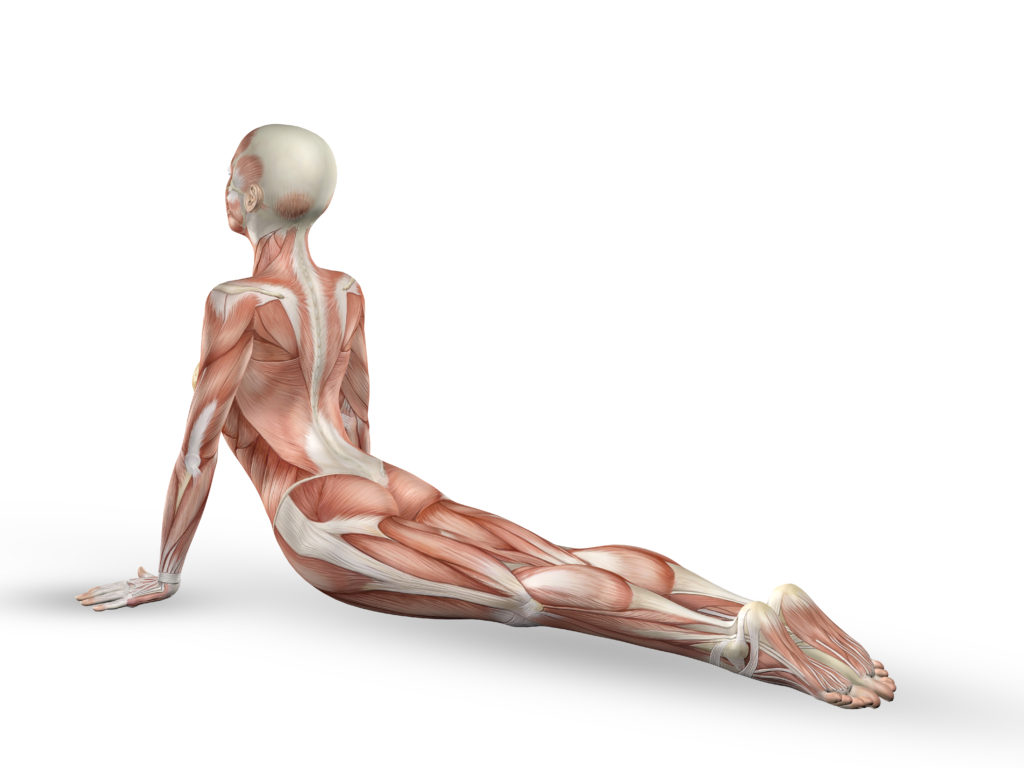 Can Yoga Relieve Musculoskeletal Problems?