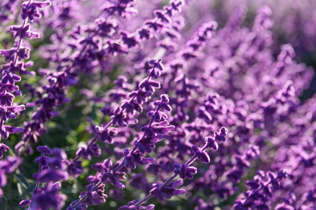 DIY Lavender Dreams Sleepy Time Essential Oil Roll On