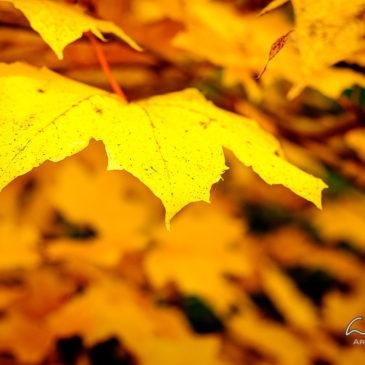 2015 Autumn Colors