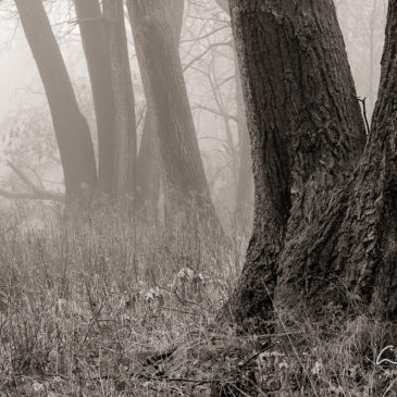 Princess Point – Black and White Landscapes