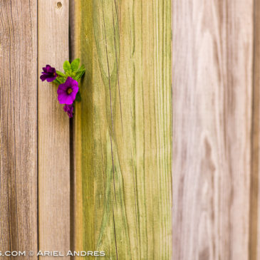 Another 365 Project – Day 133