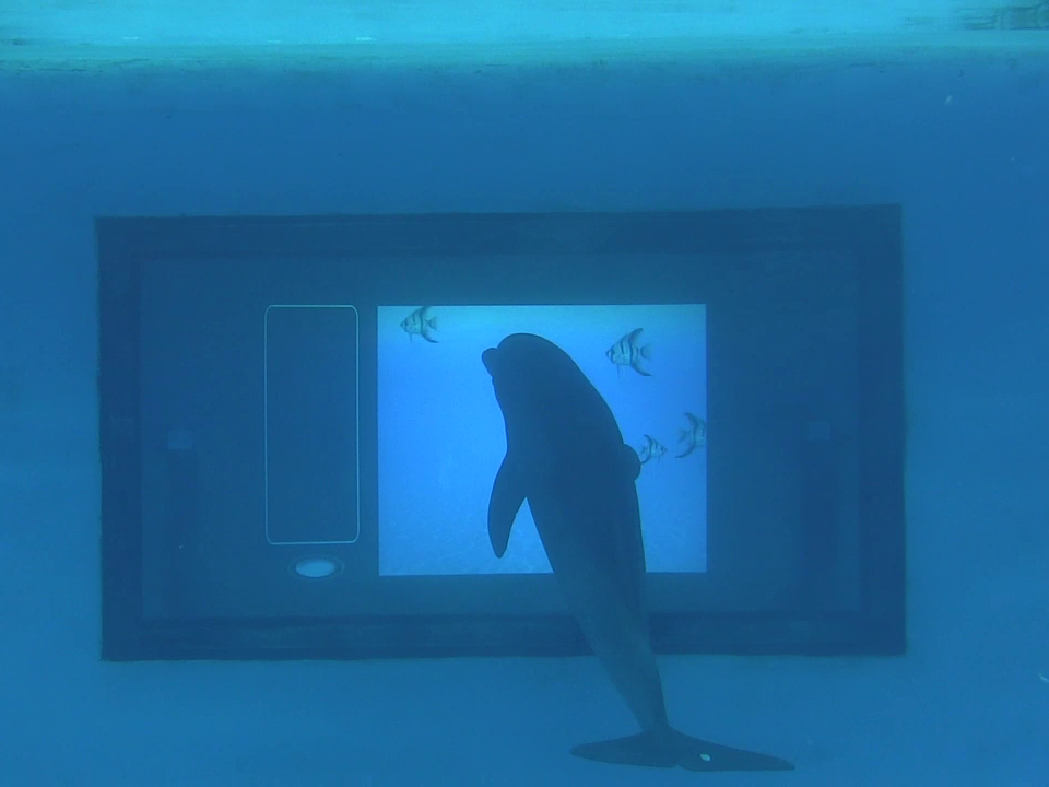 Dolphin at touchscreen