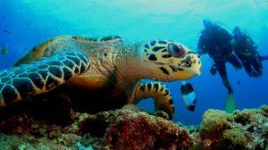 Hawksbill Turtle5 D1216-opt
