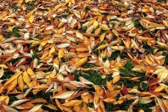 leaf clean up services