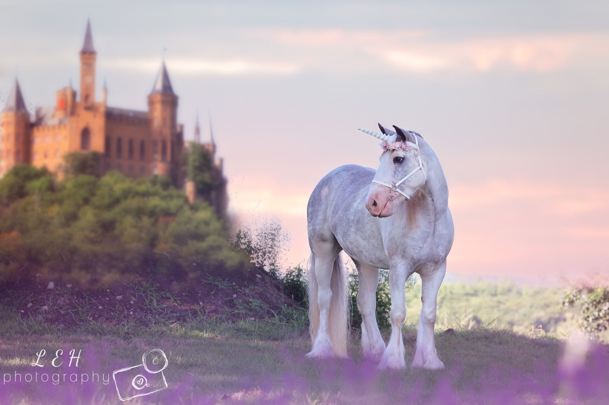Join us for National Unicorn Day at The Farm