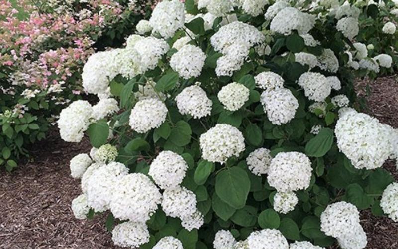 Tobin-Plantings-White