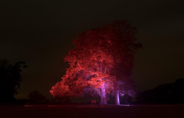Dramatic Tree Uplighting