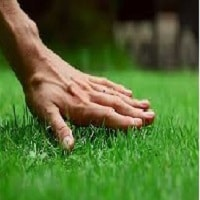 Five Best Home Practice Water Saving and Lawn Care Tips