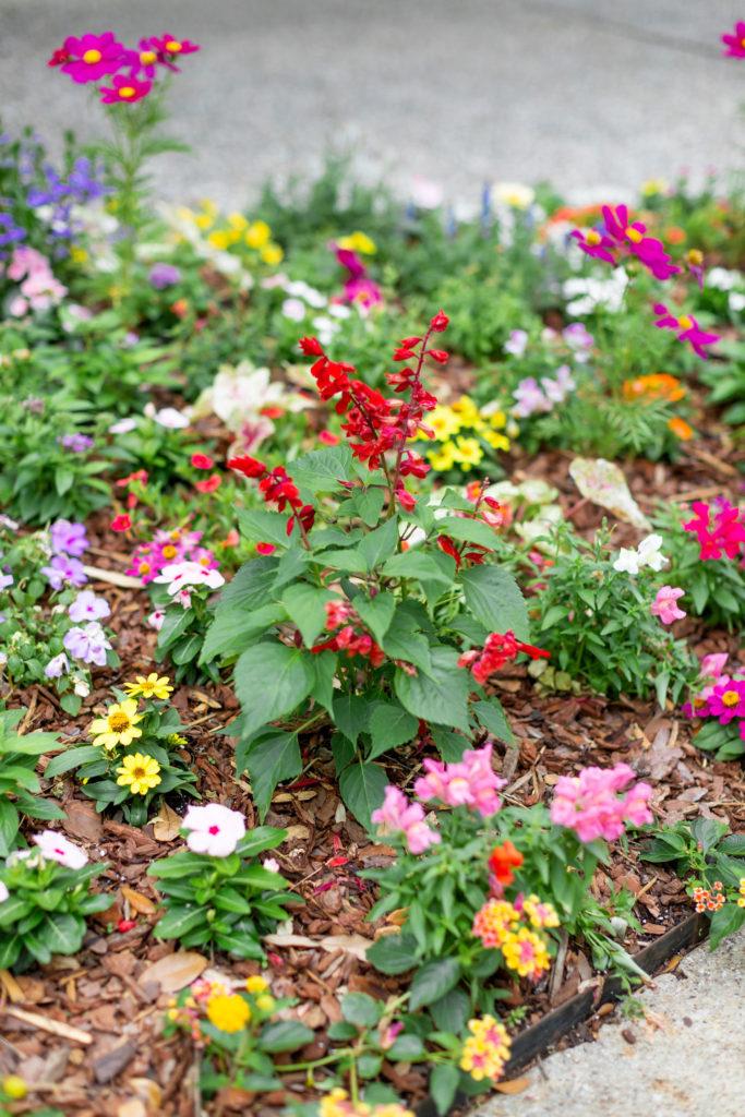 my garden spring 2019
