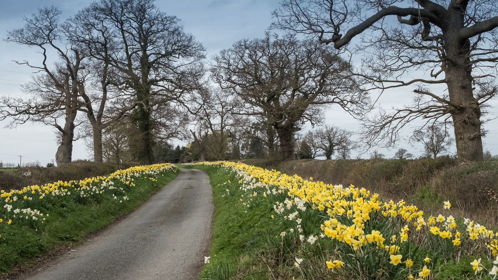 Dyrham-Lane-Looking-Splendid.jpg