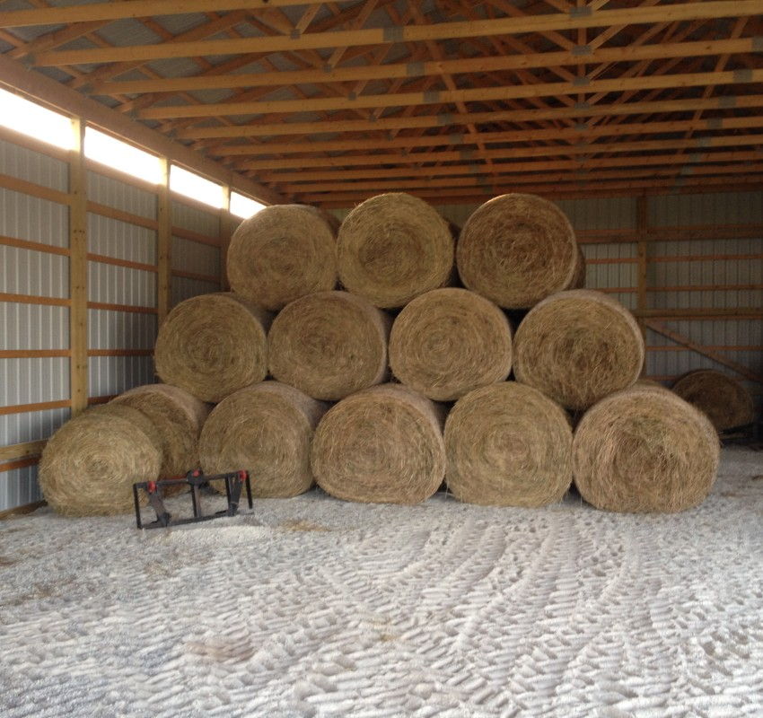 Timothy Hay for sale