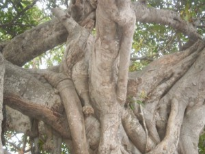 arm-in-tree