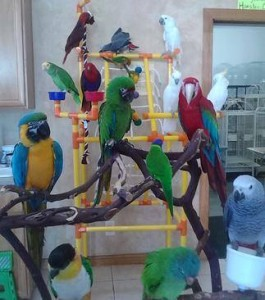 home-page-birds