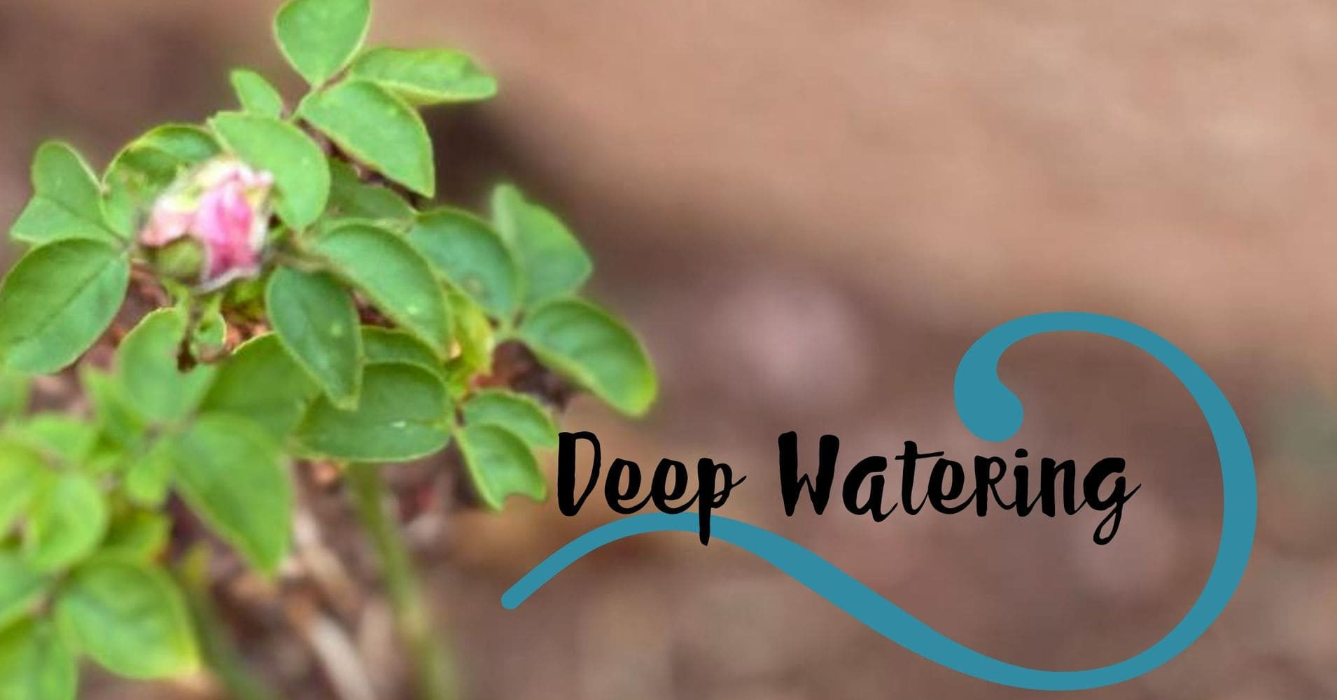 "Featured image for ""Deep Watering"""