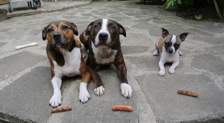 Watch out for the Little Pup. The other dogs are about to be schooled! WOW