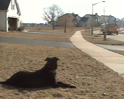 Every day after school this child is greeted by the coolest dog in the world!