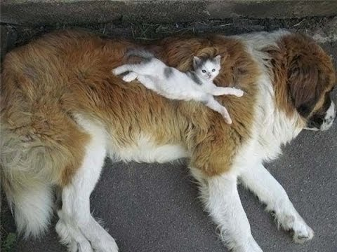 Dog Person? Cat Person? Why Choose One?