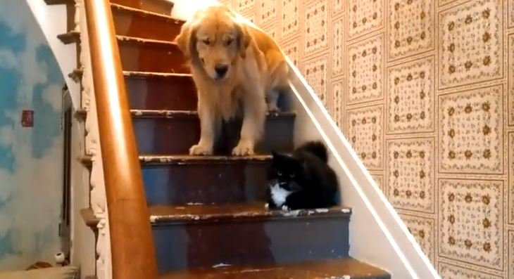 You Shall Not Pass The Kitty