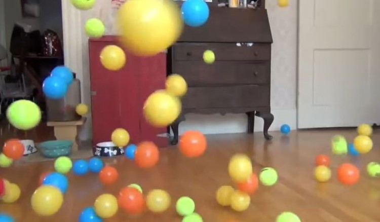 Dog Surprised With 100 Balls For His Birthday!