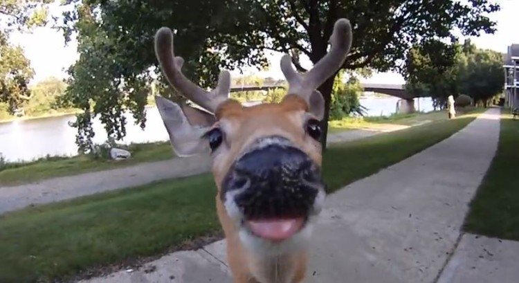 This Deer Is Ready For It's Close Up!