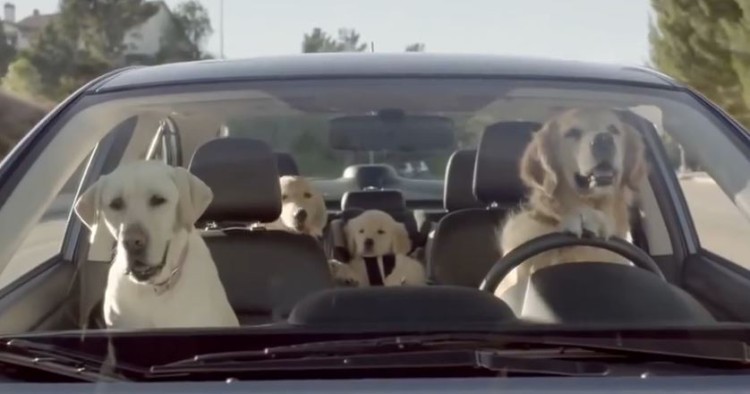 If Dogs Took Over The World It Might Look A little Something Like This!