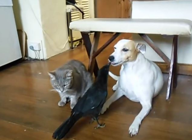 Motherly Bird Likes To Feed Its Cat And Dog Friends